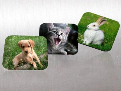 Fotomagnet Tiere